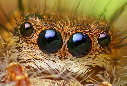 bugs6
