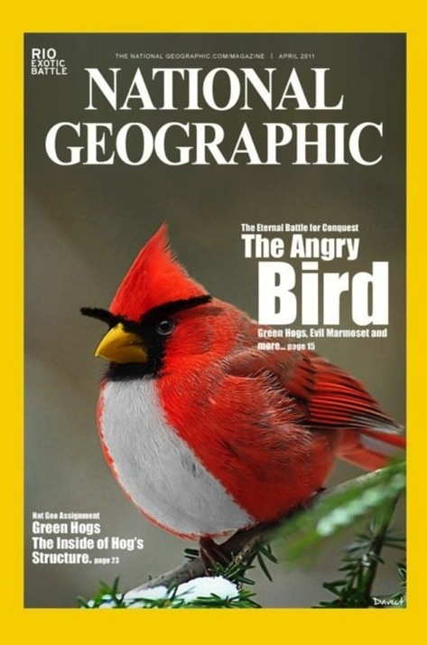National Geographic Features Quot Angry Bird Quot