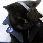 cat-nick-fury