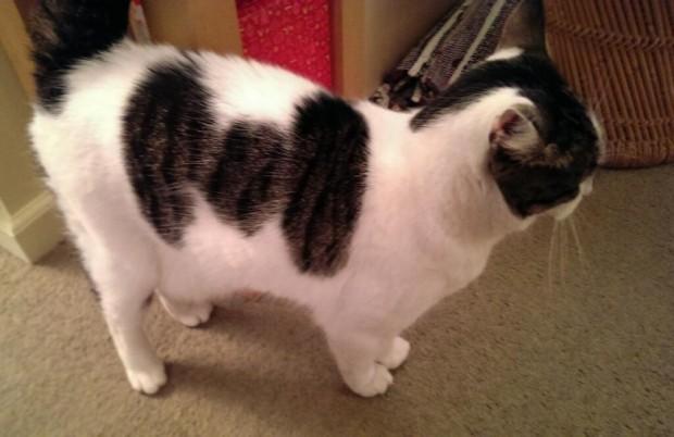 tie-cat