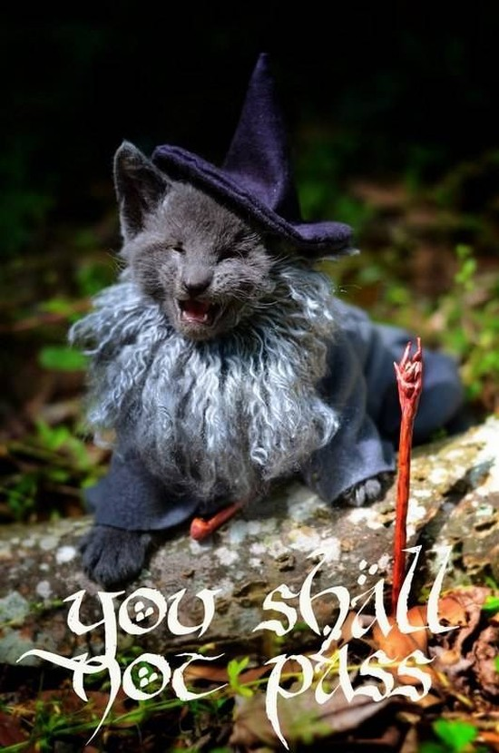 Gandalf kitteh 1
