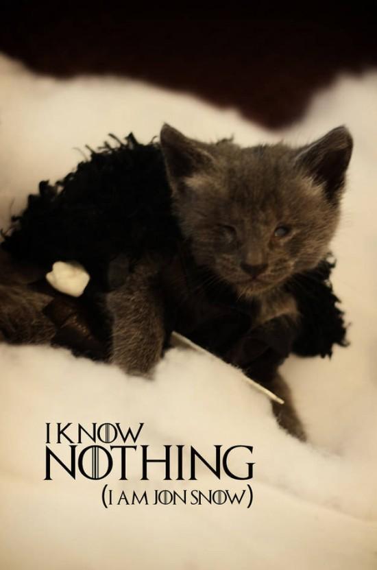 Jon Snow kitteh 2