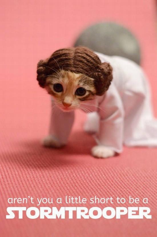 leia kitten 1