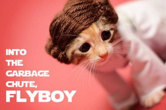 leia kitten 2