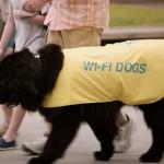 wifidogs