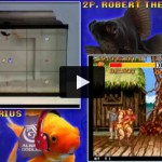 goldfishfight