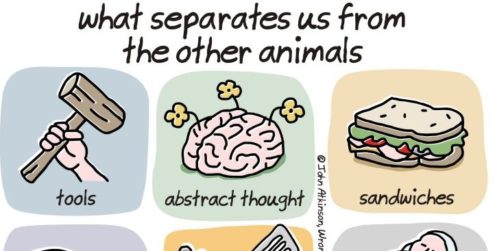 what separates humans from animals essay View essay - gwar essay 1 from improving the mind and skills improving skills this definition is what separates humans from animals as humans are the only.