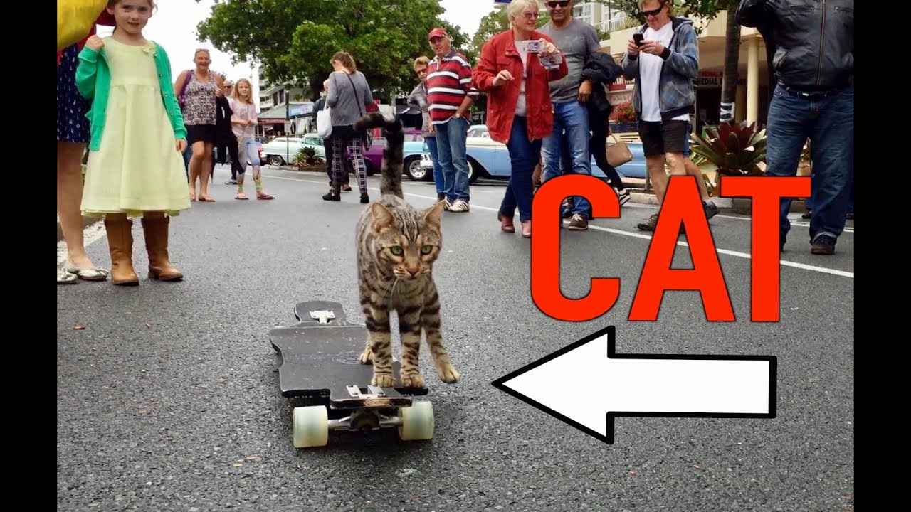 Because It's Caturday: Skateboarding Bengal Cat [Video]
