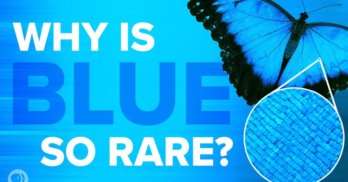 Why Is Blue So Rare In Nature Science Video